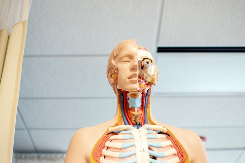 What Exactly is Pre-Med, and Which Colleges Offer It?